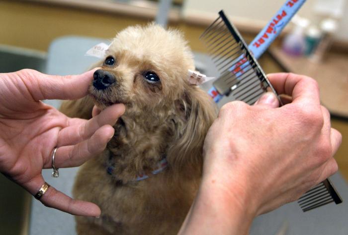 Гигиенический уход за домашними животными