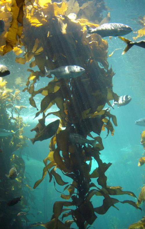 Африканский морской лес назван одним из 7 чудес света