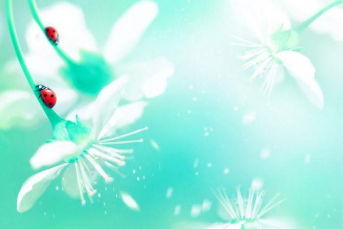 Природный дух есть во всём: природа и растения понимают человеческие намерения
