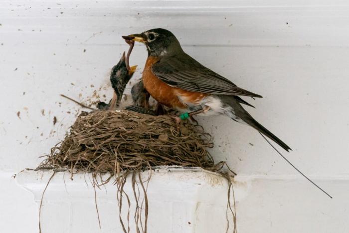 Новые технологии позволят учёным разгадать причины миграции птиц