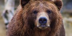 Ролик о схватке разъярённой женщины с медведицей набрал более 20 млн просмотров