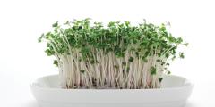 Доступный метод лечения аутизма: ростки брокколи помогают лучше всех лекарств