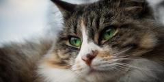 Пожилая француженка завещает свой дом брошенным кошкам
