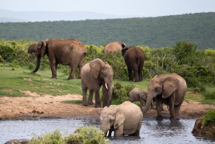 В Китае 15 слонов сбежали из заповедника и путешествуют по стране 1,5 месяца (видео)