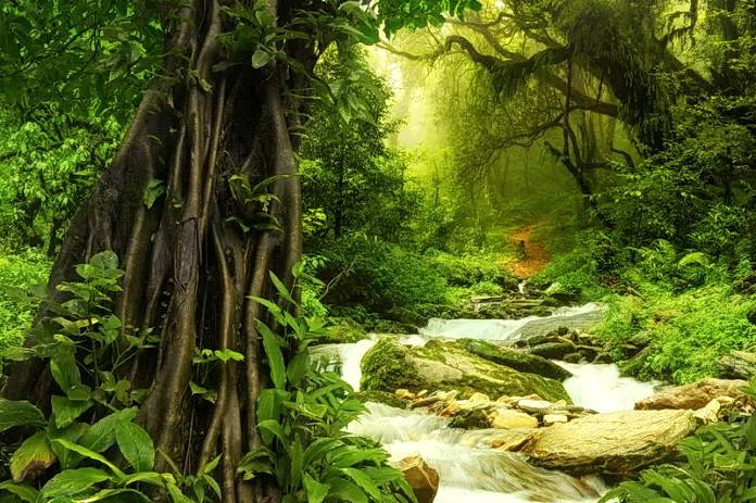 Купание в лесу: древний метод омоложения