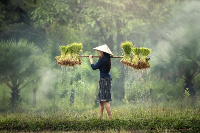 Как готовить рис, сколько сортов существует, чем они отличаются