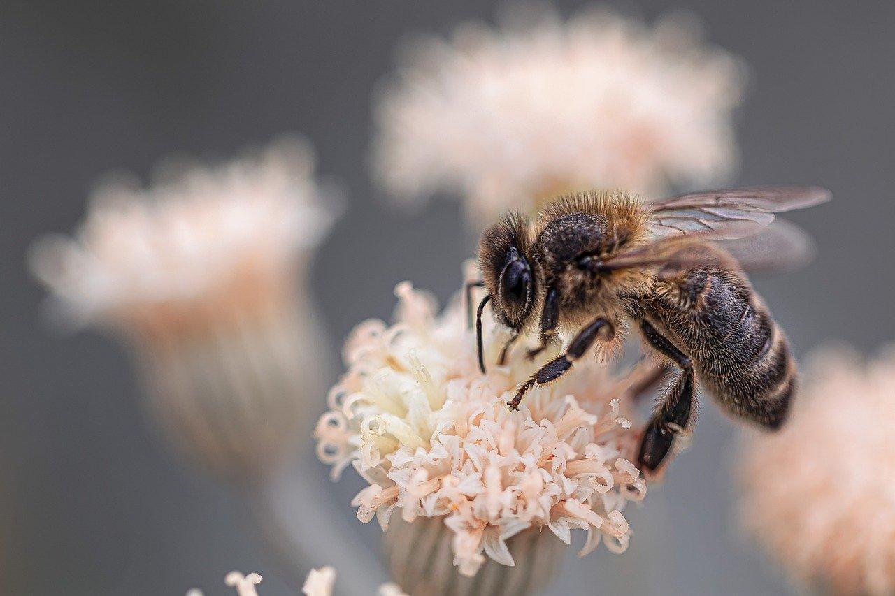 Необычные методы ухода за кожей: щекотка, слизь улитки и пчелиный яд