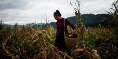 В Китае нехватка продовольствия. Под следствием — высокопоставленные чиновники