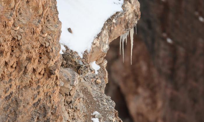 За вами наблюдает снежный барс… Видите его?
