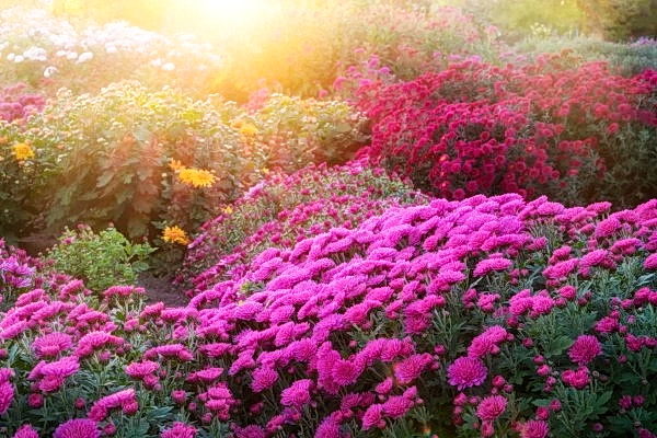 10 знаменитых китайских цветов