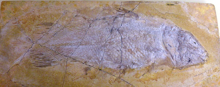 Coelacanth 7 1200x475 1 - Обнаружено «живое ископаемое» ― рыба латимерия