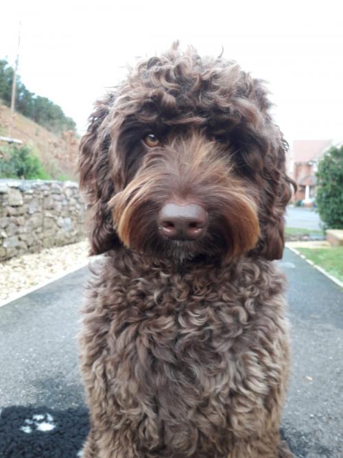 Digby 1 1200x1600 1 e1625231981206 - Собака спасла девушку от самоубийства
