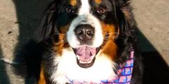 Собака-терапевт в похоронном бюро утешает людей, потерявших близких