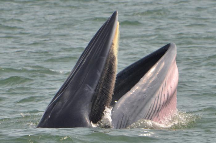 Встреча с китами незабываема и уникальна