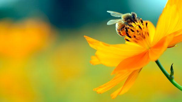 allergy vectors bee pollen 600x338 1 - Медикаментозное и естественное лечение аллергии
