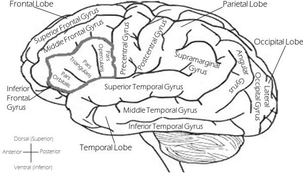 Исследование раскрывает детали реакции организма на стресс