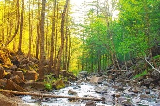 10 самых красивых лесов Китая