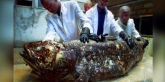 Обнаружено «живое ископаемое» ― рыба латимерия