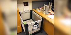 Профессор прибрёл новое «лабораторное оборудование», чтобы его аспирантка не бросила учёбу
