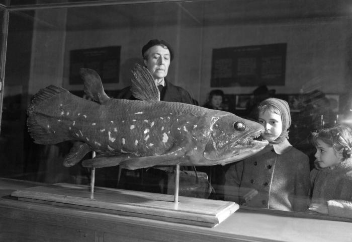 Живые «ископаемые» рыбы живут 100 лет, а вынашивают потомство 5 лет