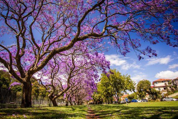 дерево, культ, цвет
