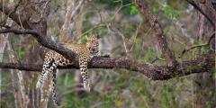 Фотограф сделал редкие снимки леопарда в Индии