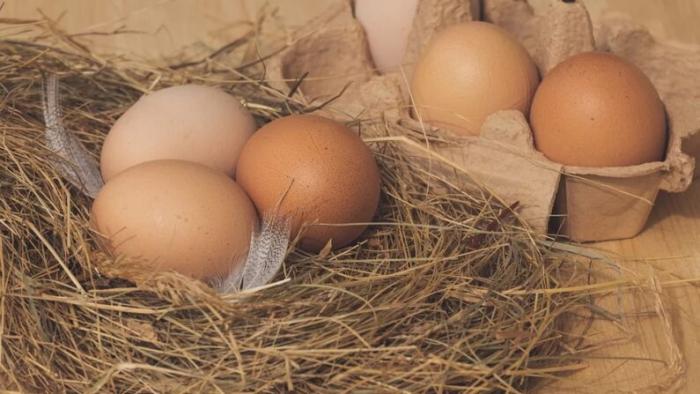 Дордонь: курица несёт яйца «гиганты», это загадка