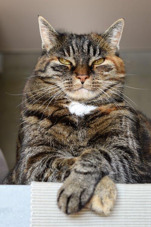 pexels photo 208984 - У вас есть кошка? Цените её!