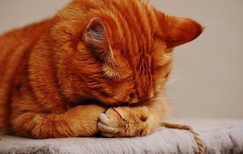 pexels photo 209037 - У вас есть кошка? Цените её!