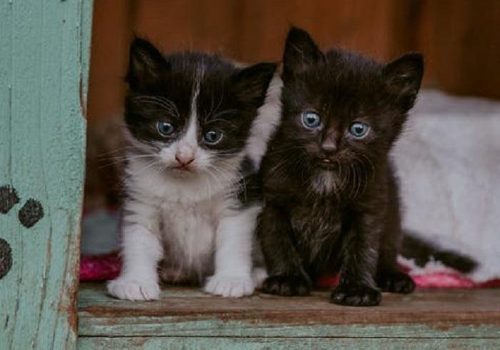 pexels photo 4012470 - У вас есть кошка? Цените её!