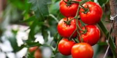 Табуле с томатным соком: новое звучание старинного салата
