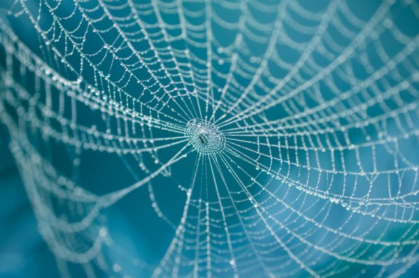 spiders are lucky in china 600x399 1 - Пять китайских символов удачи: Летучая мышь, кошка и паук — это на счастье!