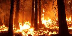 Огонь охватил Челябинскую область, Якутию иМагадан (Видео)
