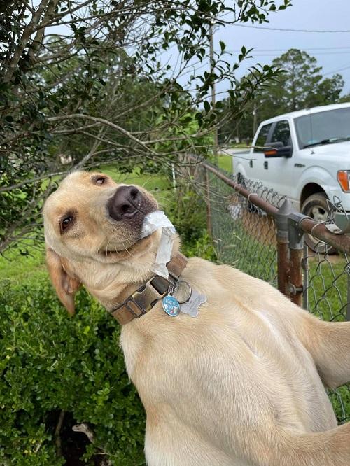 Пёс каждый день что-нибудь дарит хозяйке