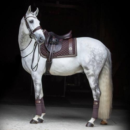 Царственная красота Лузитанской лошади