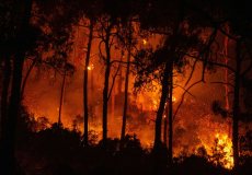 Лесные пожары в Турции устроила террористическая организация «Дети огня»