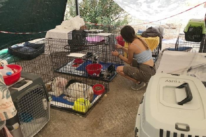 Греция: волонтёры спасают пострадавших от огня животных