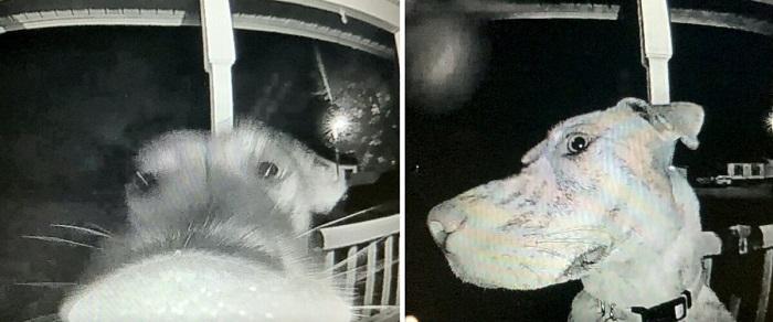 Собака вернулась домой среди ночи и стала звонить в дверь, чтоб её впустили