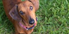 Являетесь ли вы личностью в глазах своей собаки?  Умейте распознать это