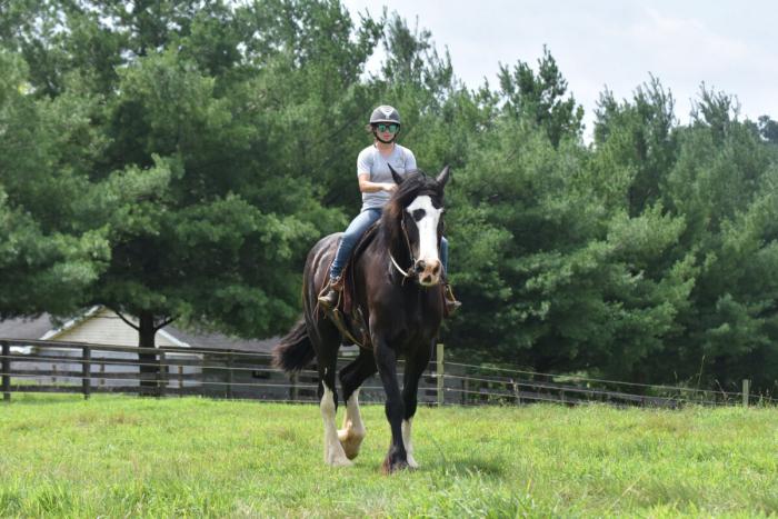 Конь Фантом — «образец ласкового гиганта»